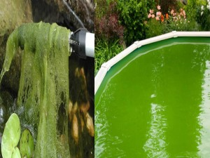 pondwater paper Pond water lab introduction: why study pond microlife right suddenly disappear from the pond use a separate sheet of paper if necessary 3.