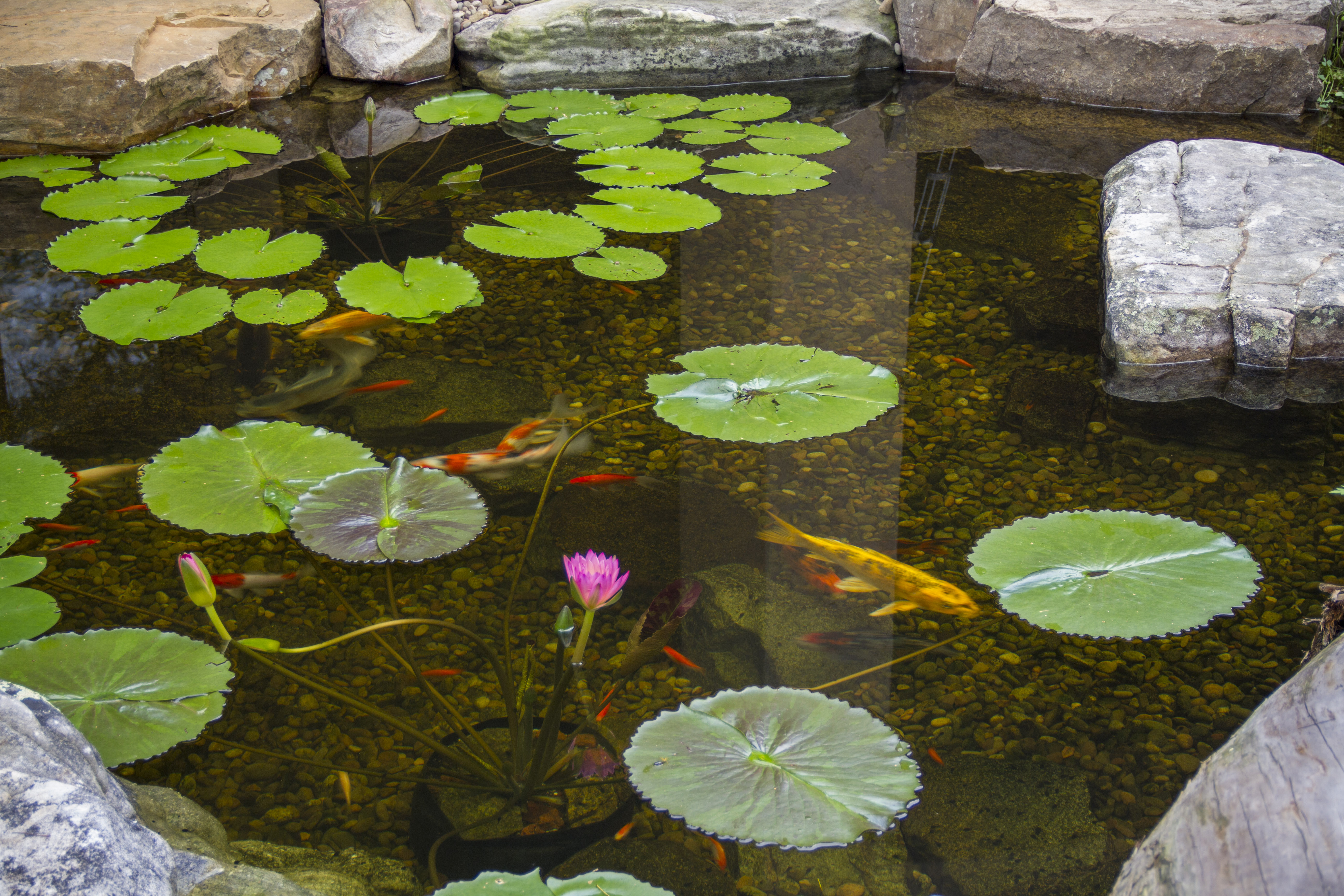 The pond outlet blog for Types of fish pond