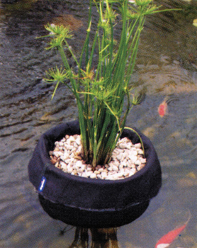 Laguna floating plant baskets plant containers for Floating plant pots