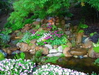 Miller's Pond 2