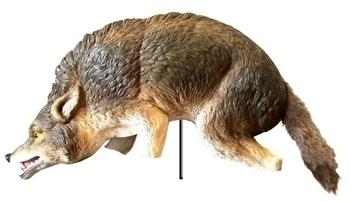 Pond Decoy, Predator Control   Coyote Decoy