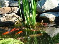 Margaret's Pond thumbnail