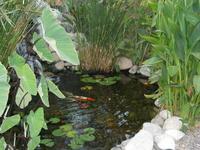EdnLourdes' Pond thumbnail