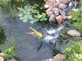 Al's pond thumbnail