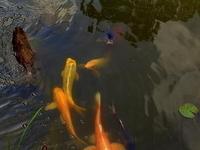 Ginger's Pond7 thumbnail