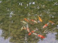 Anthony's pond #2    Rome, NY thumbnail