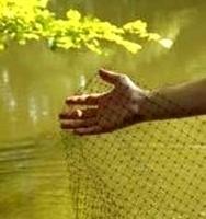Image Bulk Pond Netting 3/4