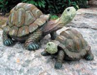 Image Turtle - 6