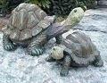 Image Turtle - 10