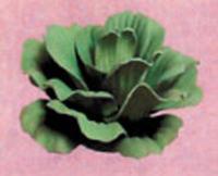 Image Imitation Floating Water Lettuce