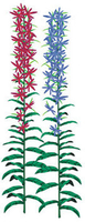 Image Imitation Cardinal Flower - Red