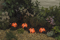 Image Ladybug Solar Light Set -4-pack