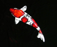 Image Mark MacKay Ceramic Koi - Coming Soon!