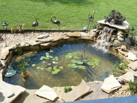 Cindi's KOI Pond, FL thumbnail