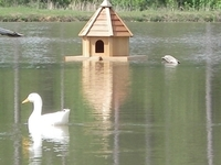 Image Floating Duck House - Aqua Duck