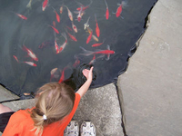 Jeff Pinard's niece feeding fish thumbnail