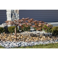 Image Creeping Maple Tree Fountain  & Kit