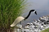Image Dancing Birds - Geese