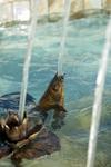 Koi fish bronze spitter by roxanne skene spitters for Ultimate koi clay
