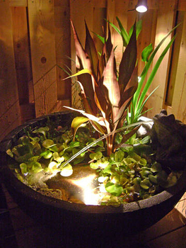 Aquatic Patio Ponds by Aquascape