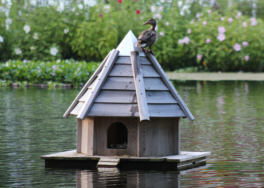 Pond decor floating duck house for How to build a duck shelter